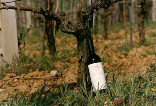 Rascioni-e-Cecconello-la-prima-bottiglia